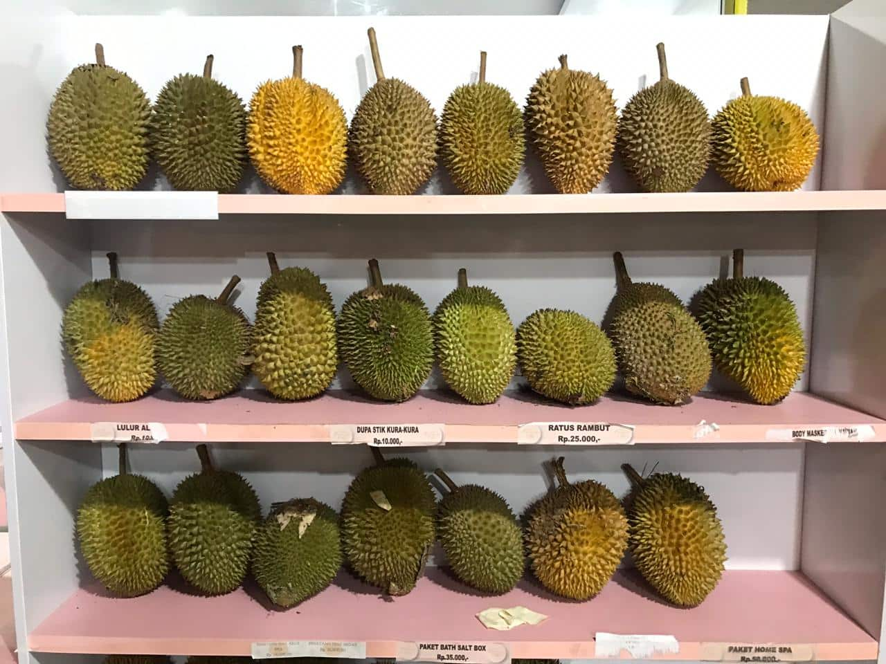 supplier durian medan